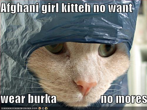 Lolcat: Afghani girl kitteh no want wear burka no mores