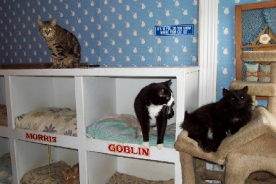 Thumbnail photo of cats in Anderson House hotel