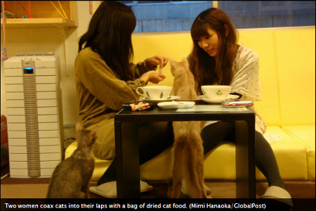 http://1389blog.com/pix/Cat-Cafe.png