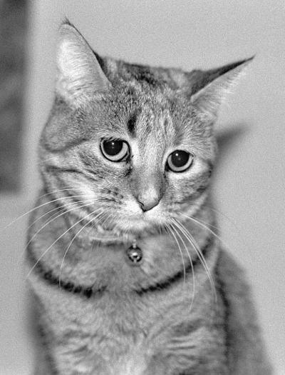 Black-and-white photo of mfhorn's tabby cat Emily