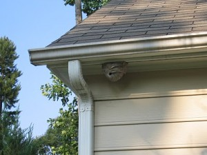Hornets' nest on house
