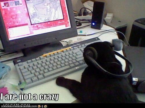 Lolcat at computer: 'I are not a crazy'