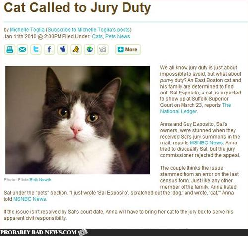 Cat Called to Jury Duty