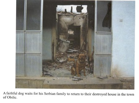Faithful dog waits for Serb owners to return to destroyed house in Obilic