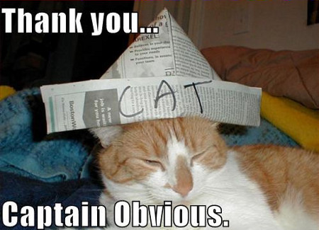 Cat with a newspaper hat on his head, labeled 'CAT' - captioned 'Thank you...Captain Obvious.'