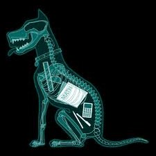 X-Ray of dog that ate homework