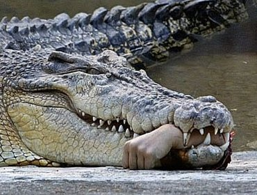 Appeasement: Hoping the crocodile will eat you last
