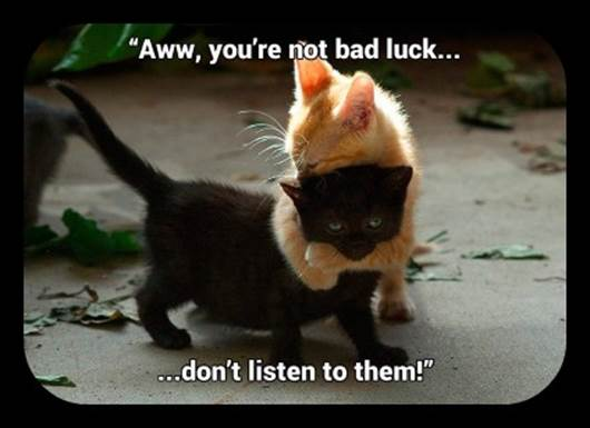 Orange cat hugging black cat: 'Aww, you're not bad luck. Don't listen to them!'