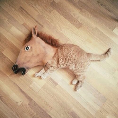 Cat wearing horse head