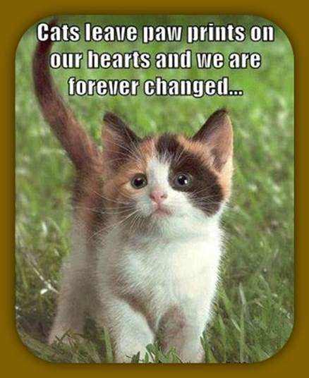 Cats leave paw prints on our hearts and we are forever changed...