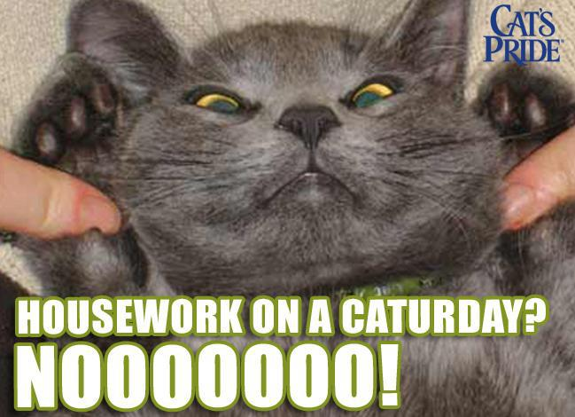 Housework on a Caturday? Nooooooo!