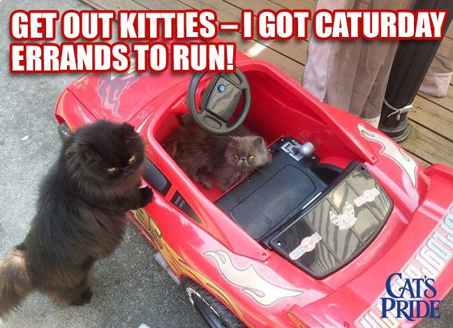 Get out kitties - I got Caturday errands to run!