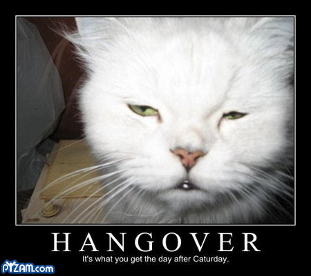 Bleary-eyed cat: HANGOVER - It's what you get the day after Caturday.