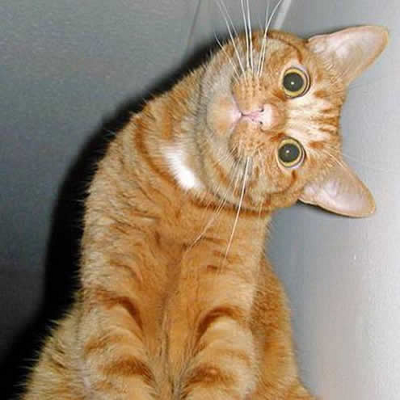 Orange cat with head tilted sideways
