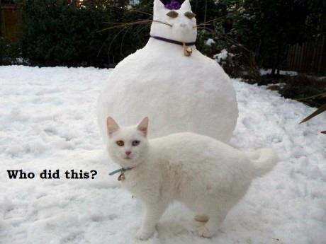 White cat with snowcat: 'Who did this?'