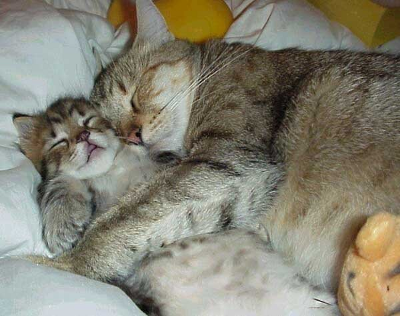 Sleeping cat and kitten