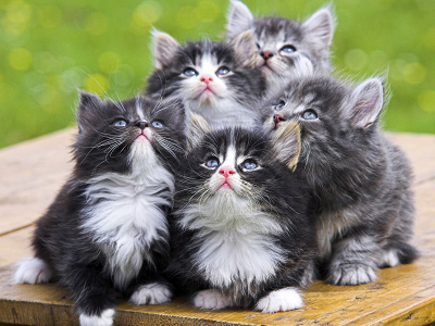 Five kittens posed in formation