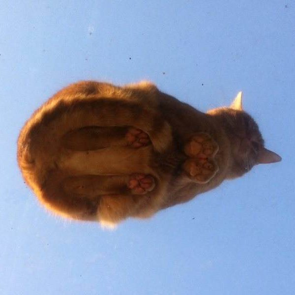 Orange cat on a skylight, seen from below