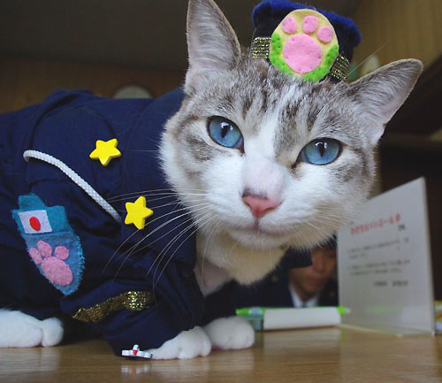 Police Station Cat