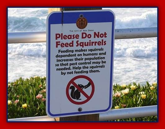 Sign: Please Do Not Feed Squirrels - Feeding makes squirrels dependent on humans and increases their population so that pest control may be necessary. Help the squirrels by not feeding them.