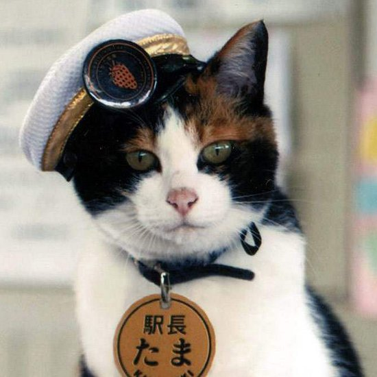 Station Master Tama the Cat