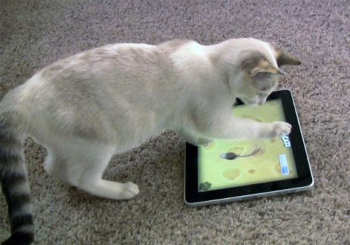 Maxine playing with tablet