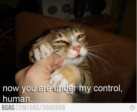 Cat: Now you are under my control, human!