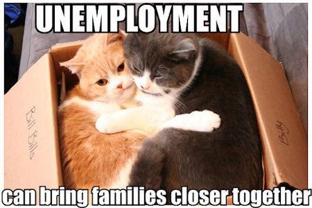 Two cats in cardboard carton: UNEMPLOYMENT can bring families closer together