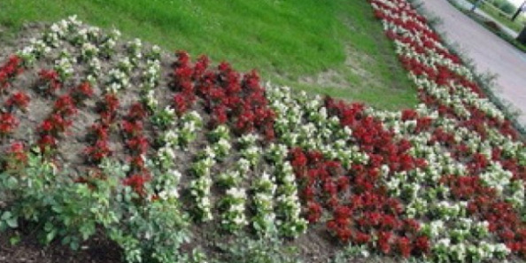 Flowers at Jasenovac in red/white checkerboard U-shape