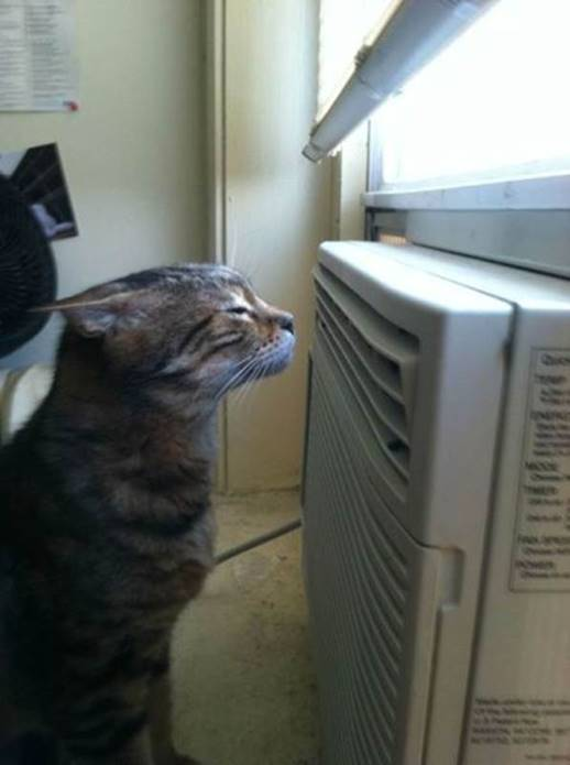 Cat in front of window A/C