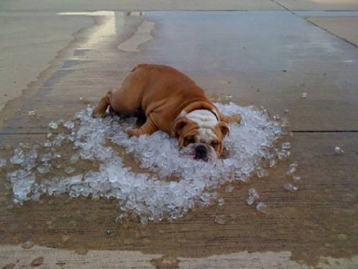 Cute dog wallows in ice cubes